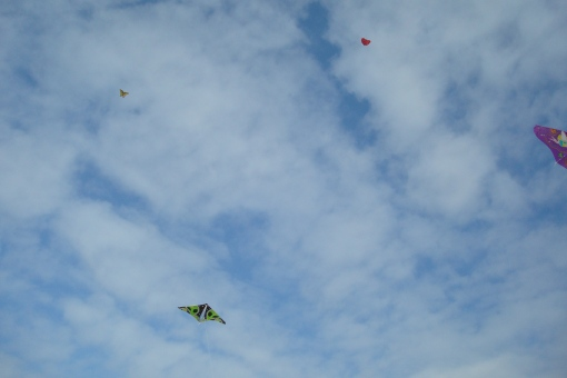 Four of the kites in the air.