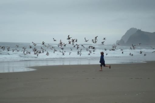 Chasing seagulls.